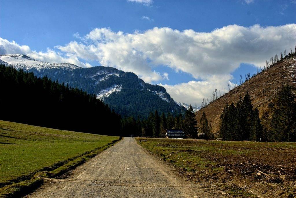 Bieszczadzki Park Narodowy - las