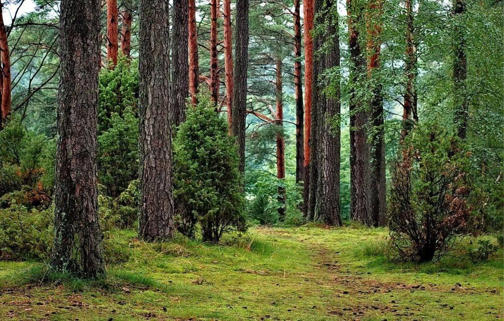 Gorczański Park Narodowy - las