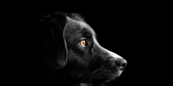 Przestraszony pies