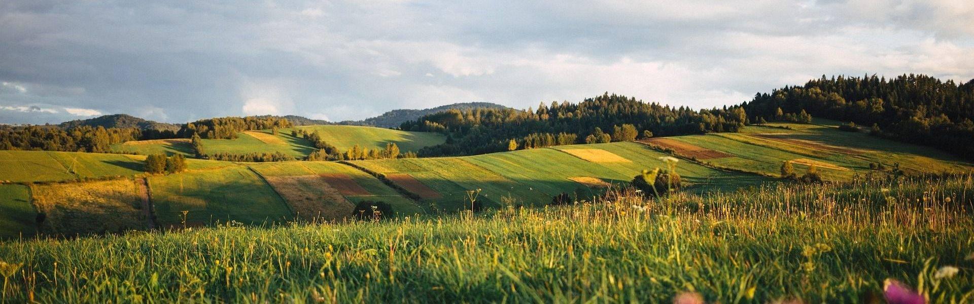 Pola w Bieszczadach
