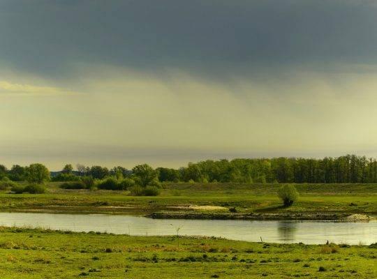 Rzeka przy lesie