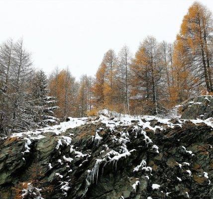 Skarpa warszawska
